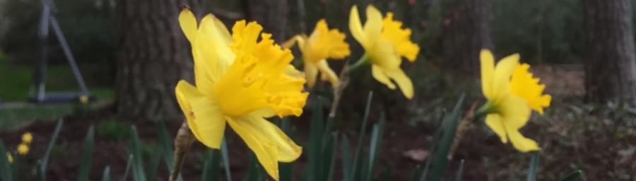 Spring in Durham